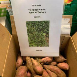 Pā to Plate market garden 1